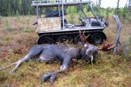 Bruce-2008-Moose-1