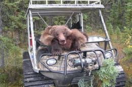 Sam2007-Bear-3
