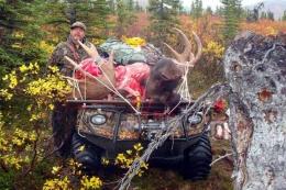 Snell-moose